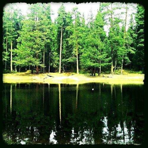 озеро лето2013 Лес отражения