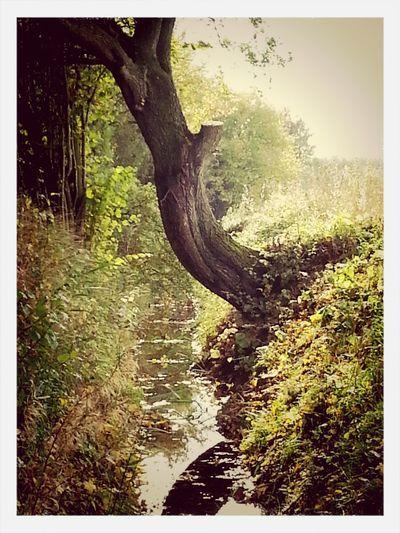 Schleswig-Holsteiner Idylle mit Knick und kleinem Bachlauf. Landscape BACH Knick Baum