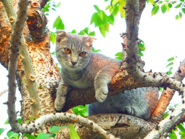 naughty cat Naughty Cat