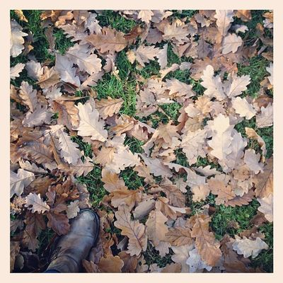 Kicking around fallen leaves Berlin Leaves Autumn Fall Herbst Autunno  Whpbehindthelens