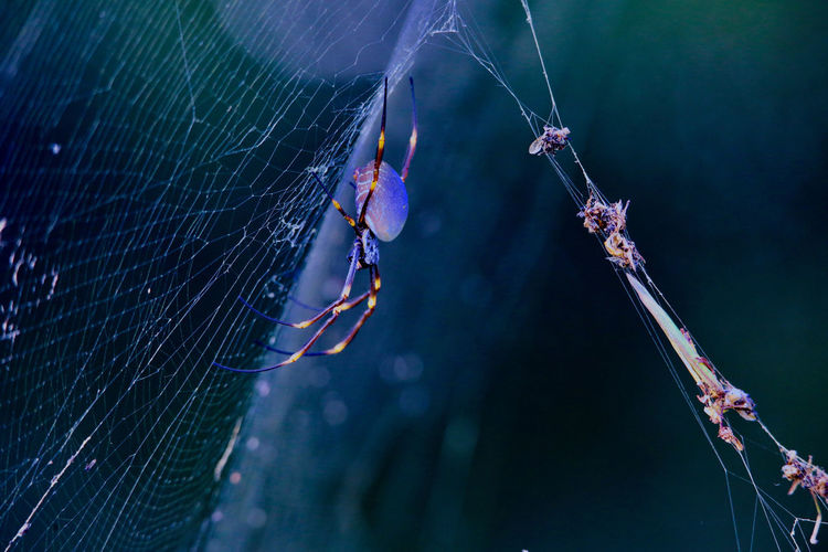 spider and web Animal Animal Themes Animal Wildlife Focus On Foreground Invertebrate Nature Close-up Animals In The Wild One Animal Spider Web Outdoors Insect No People Spider Arachnid