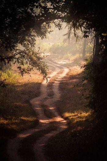 a path on indian safari Kanha National Park Kanha Bandhavgarh Madhya Pradesh India Framed Forest Nationalpark Street Indian Safari Dust Safari Tree Shadow Sunlight No People Outdoors Nature Forest Beauty In Nature EyeEmNewHere