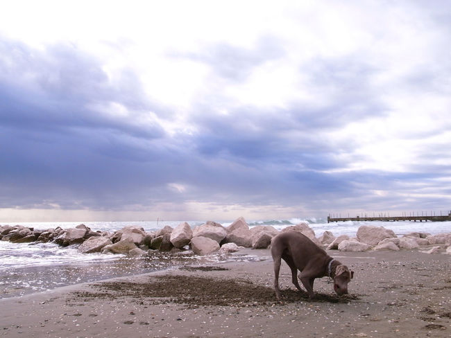 Lido island, Venice Adriatic Sea Animal Themes Beauty In Nature City Break Cloud - Sky Day Domestic Animals Holiday Italy Landscape Livestock Mammal Nature No People Outdoors Sand Scenics Sea Sky Tranquil Scene Travel Travel Destinations Venice Water Weather
