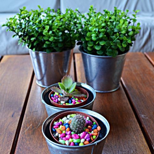High angle view of various potted plants on table
