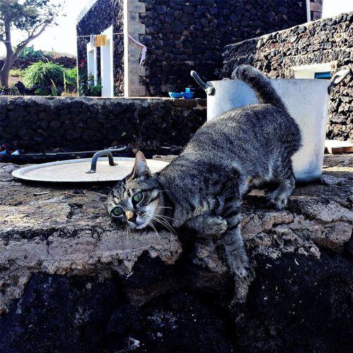 Cat on retaining wall