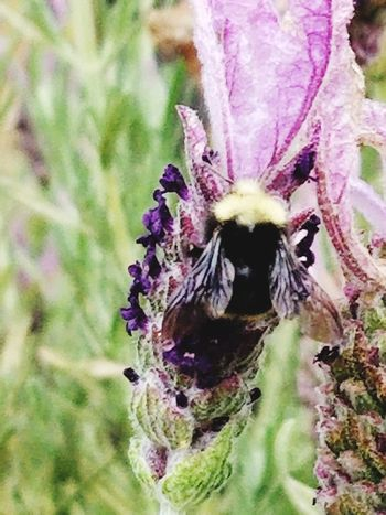 Flower Head Flower Insect Purple Close-up Animal Themes Plant