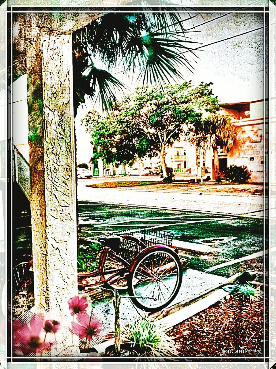 bicycle, tree, transportation, wheel, mode of transport, building exterior, day, outdoors, land vehicle, no people, built structure, growth, stationary, architecture, nature, palm tree, close-up