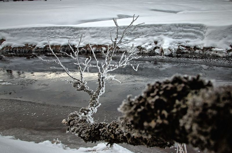 Ice Modrava Roklansky Potok Tree Winter Wintertime Beauty In Nature Cold Temperature Day Landscape Nature No People Outdoors River River In Winter Snow Stream Tranquility Trunk Trunk Detail Trunk Tree Water Winter Šumava Šumava Bohemia EyeEmNewHere