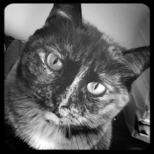 Cat Blackandwhite Ilovemycat My Cat