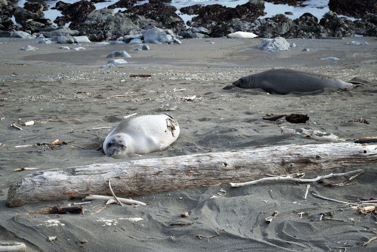 California Coast California Ocean Sea Lion