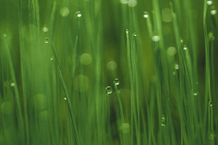 Close-up of raindrops on green grass