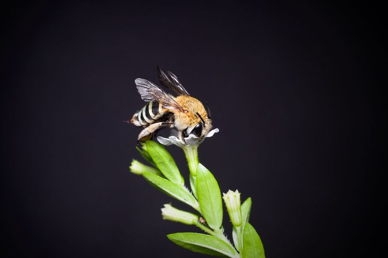 """""""Love This Bee"""""""