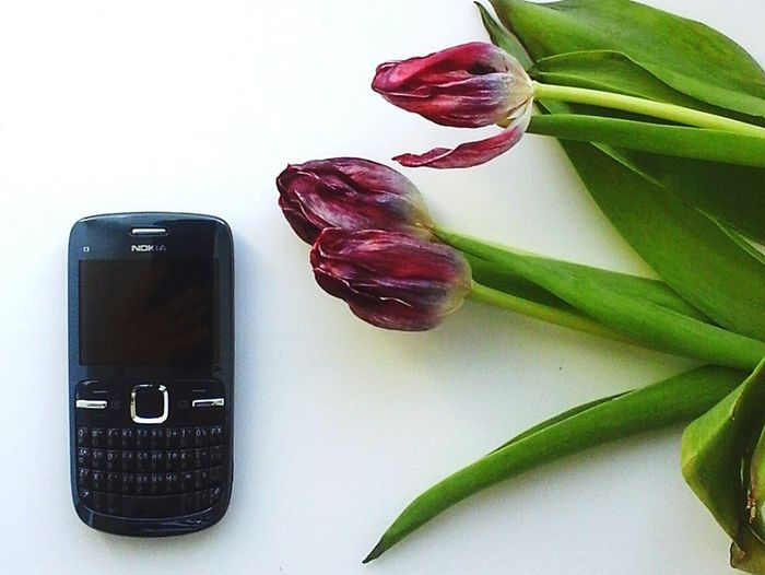 Nokia Retro Vintage Tulip Flower First Eyeem Photo