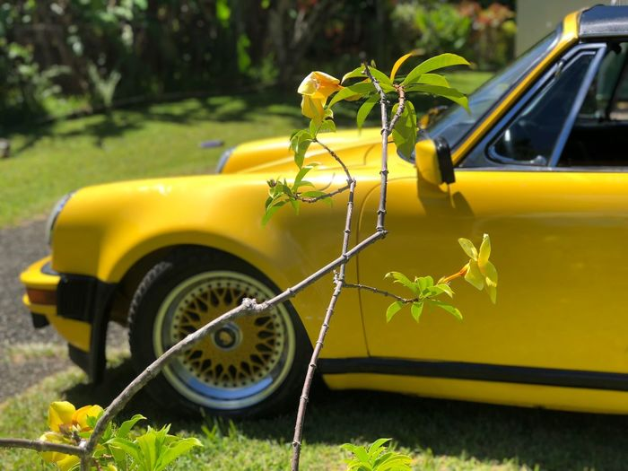 Yellow flower with a yellow diamond Puertorico Porschetarga Porsche Mode Of Transportation Car Motor Vehicle Transportation Land Vehicle Plant Yellow Day Nature Flower Flowering Plant Outdoors No People Leaf Stationary Plant Part Focus On Foreground Green Color Growth Close-up