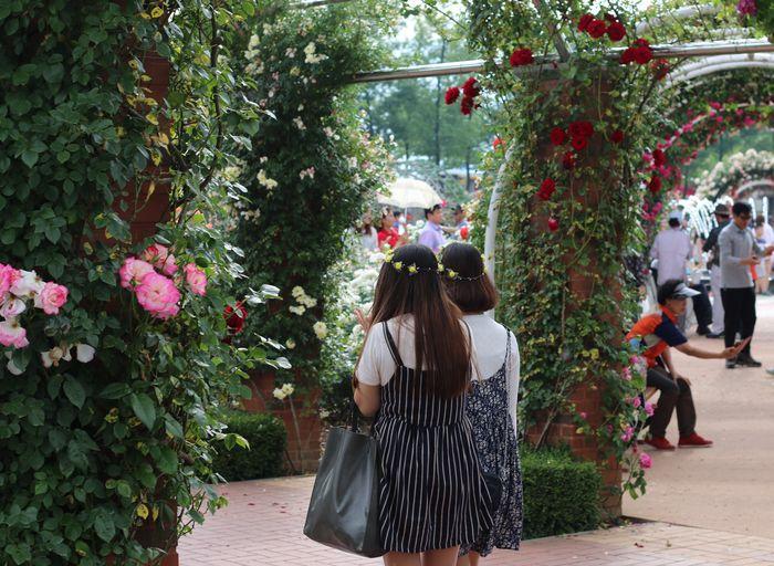 Rear View Of Women In Garden