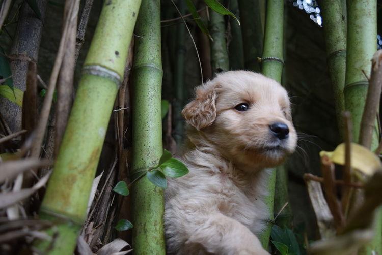 Close-up of dog amongst bamboo