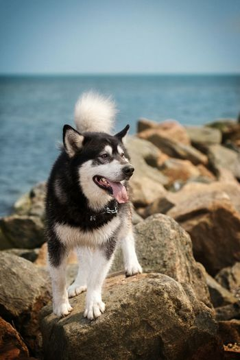 Dog looking away on rock in sea