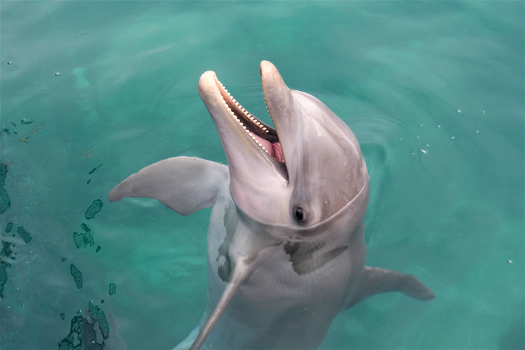 Smiling dolphin Oceanlife Ocean Dolphin Smile DolphinShow Dolphinarium Sea Animals In The Wild Underwater Animal UnderSea Mammal Scuba Diving Fish Adventure No People Swimming Outdoors Day Water
