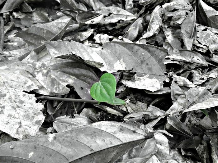 I'm different,, EyeEm Best Shots EyeEm Nature Lover Nature Leaf Outdoors No People Close-up EyeEm Indonesia