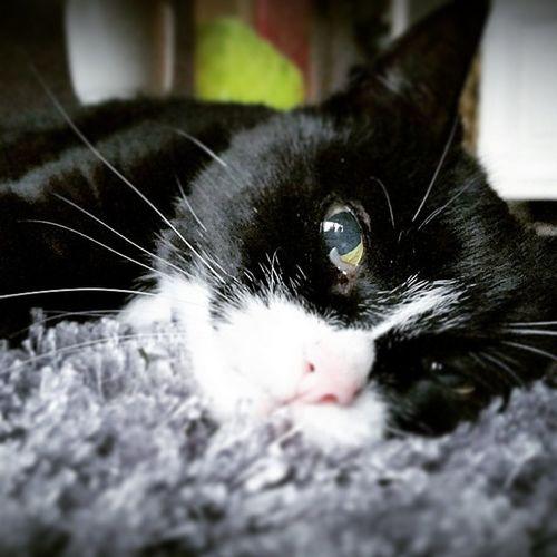 Cat Kat Moortje Friend love miss friendly empty cuddle gemis vriend knuffelen like facebook follow