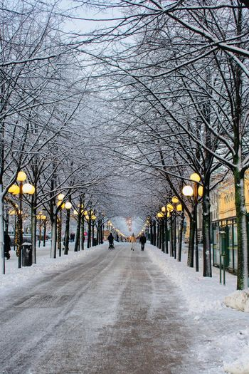 Snow covered footpath amidst bare trees in city