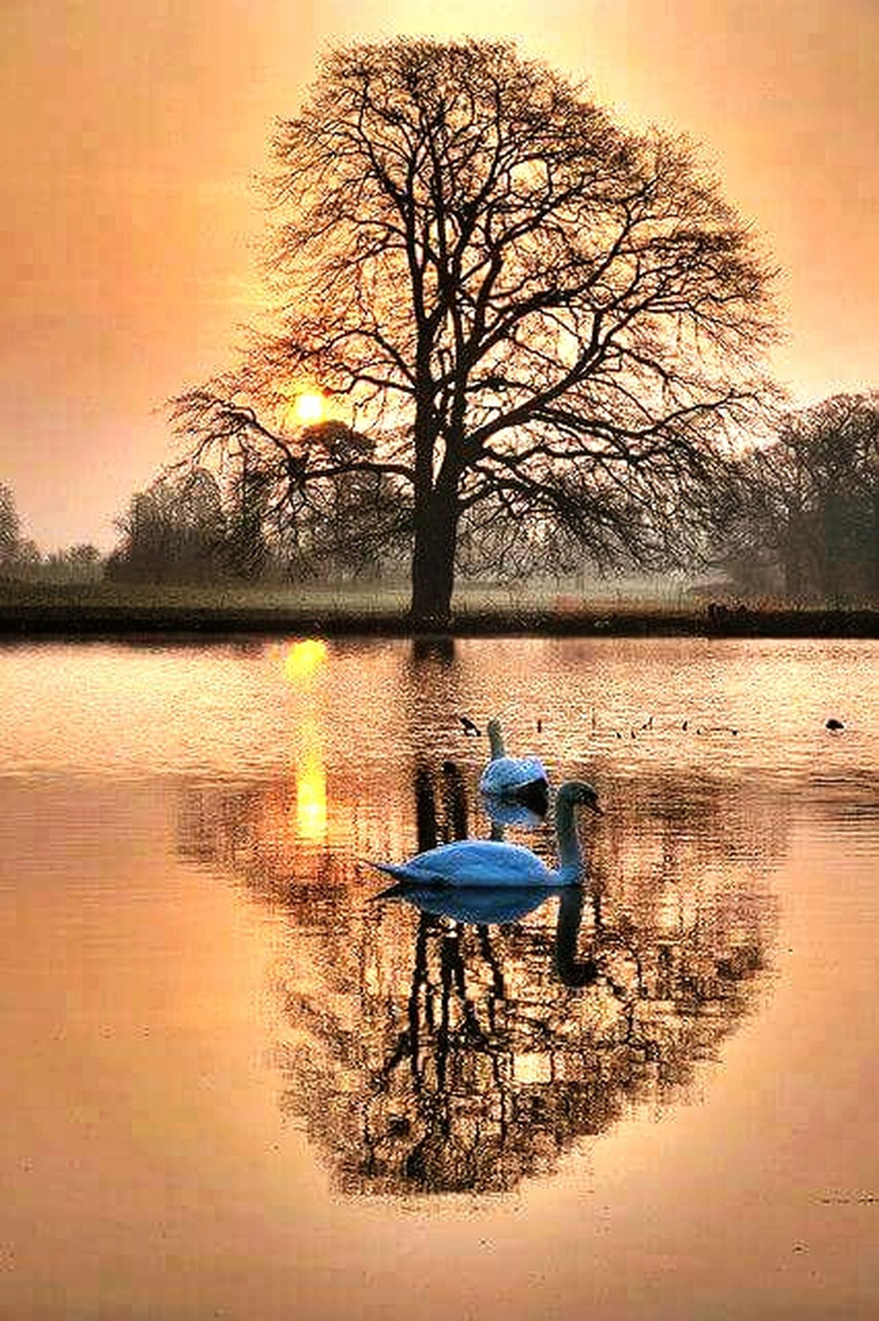 water, sunset, tree, tranquil scene, reflection, tranquility, lake, silhouette, scenics, bare tree, nature, beauty in nature, sun, branch, sky, nautical vessel, boat, idyllic, transportation, orange color
