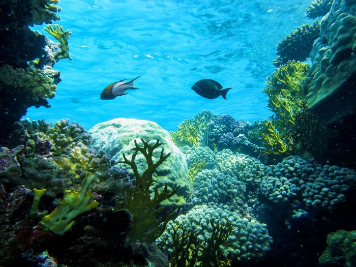 Diving Diving Dive Underwater UnderSea Fish Sea Sea Life Animals In The Wild Animal Themes Swimming No People Nature Coral Blue Multi Colored Animal Wildlife Water