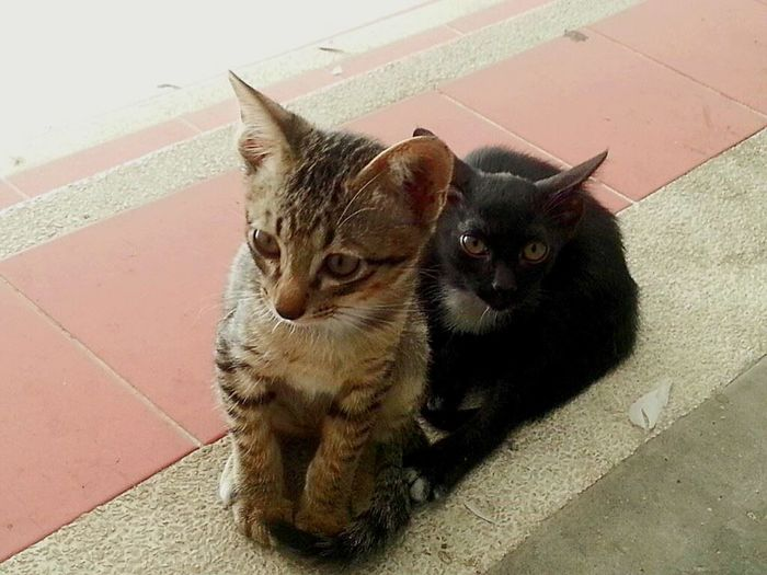 Two Is Better Than One Pets Domestic Animals Animal Themes Domestic Cat Mammal Cat Feline Animal No People Relaxation Resting Close-up Lying Down Cats Cat♡ Cat Lovers Cats 🐱 Cat Watching Catportrait Cat Photography Kitten Kittens Kitten 🐱