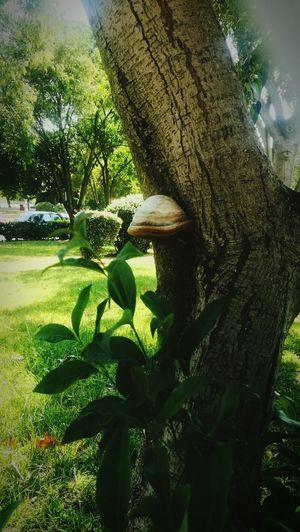 Mushroom Green Nature #september #tree #university Tree Water Sunlight Sky Close-up Green Color Grassland Growing Plant Life First Eyeem Photo