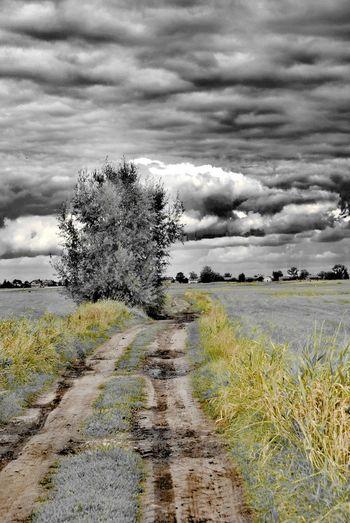 Tree Rural Scene Agriculture Field Sky Grass Landscape Cloud - Sky