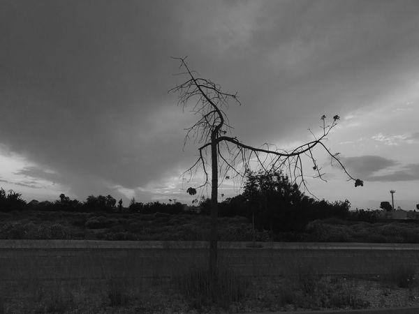 Deadtree Sky