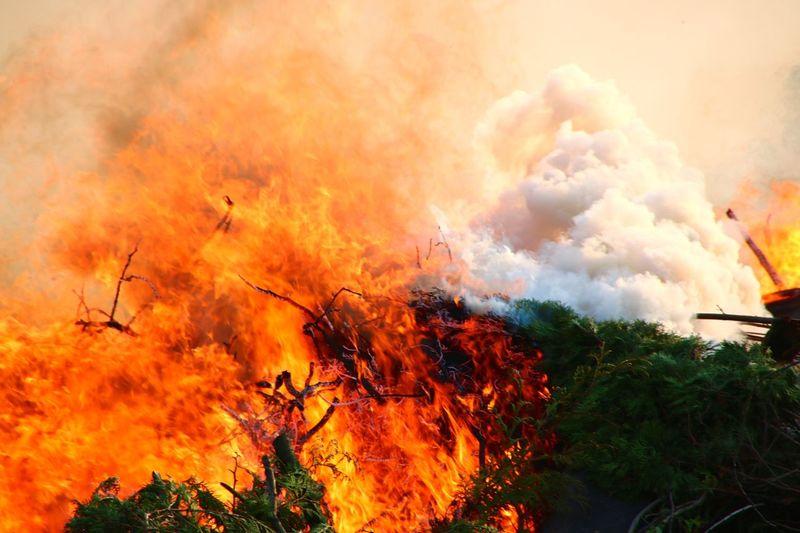 Feuer Fire Forest Fire Firefighter Waldbrand