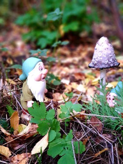 Zwerge im Wald