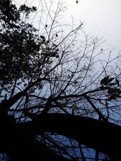 Tree EyeEm
