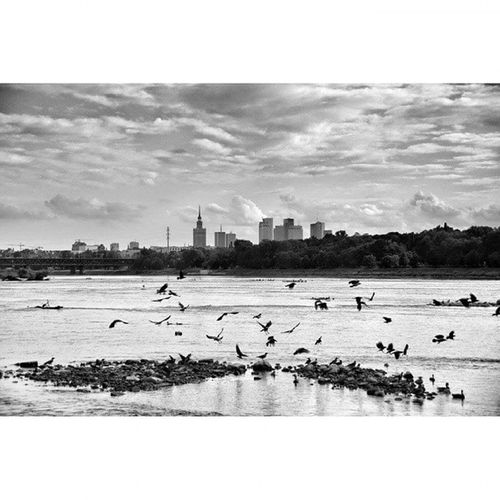 Warsaw Warszawa  Wwa Wisla Zeran Birds City Urban Slavic Canon6d Canon Streetphotography Gtcreate