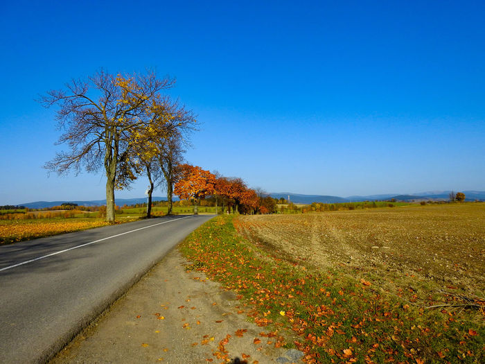 Sky Road Autumn Tree Landscape Direction Tranquil Scene The Way Forward Transportation Plant Nature Environment Beauty In Nature Scenics - Nature Tranquility Blue Change Land Clear Sky No People Diminishing Perspective Outdoors