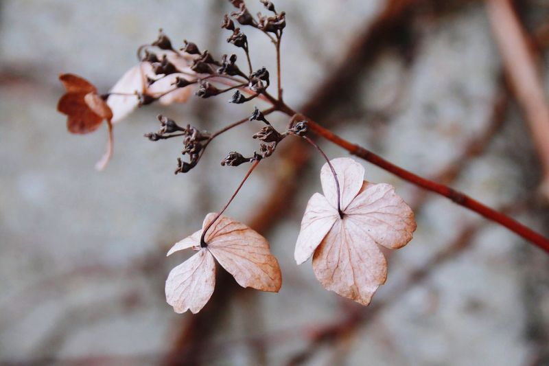 Nature No People Beauty In Nature Lower Saxony Flower Leaves