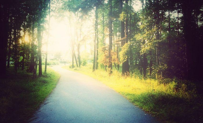My neigburhood. Bagarmossen Sun Trees Forest