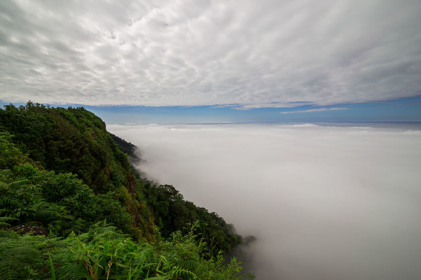 aerial view of rain forest Cloud Tree Aerial View Beauty In Nature Cloud - Sky Day Fern Fog Horizon Over Water Landscape Mist Nature No People Outdoors Rain Forest Scenics Sea Sky Tranquil Scene Tranquility Tree Water
