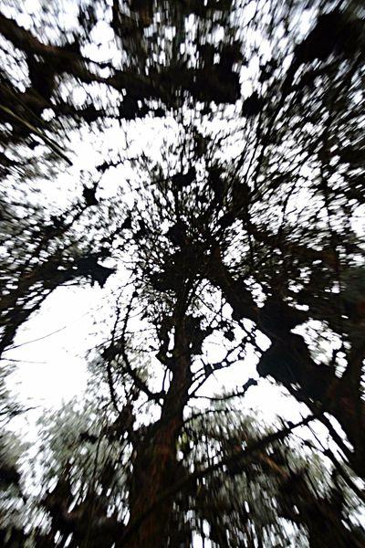 Distorsiones/Distortions LifeGreen Nature Colombia La Forêt