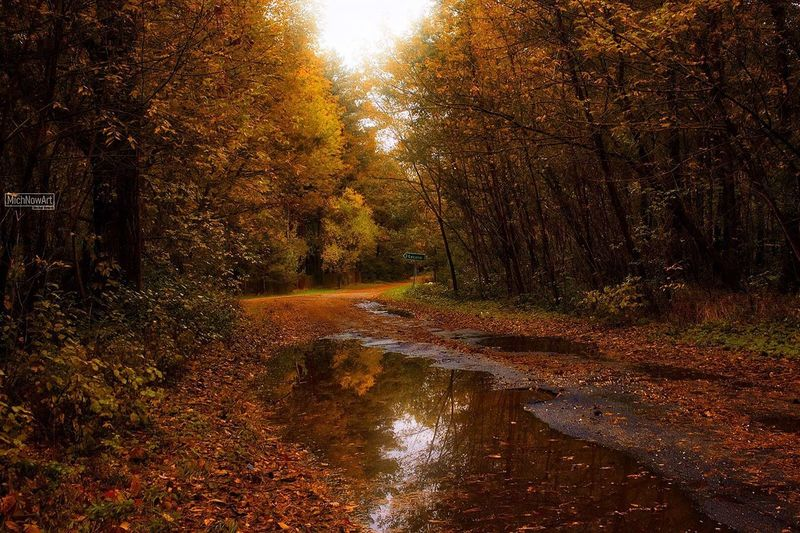 Autumn Tree Forest Nature Leaf River Scenics WoodLand Landscape Change No People Outdoors Sun Single Lane Road Tranquil Scene Sunset Tranquility Water