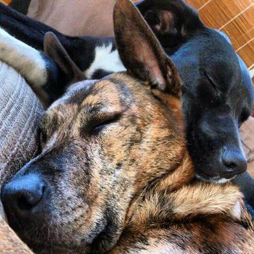 Enjoying Life I Love My Dog Ile Verte Juziers Chiens Dog Chien Lana Arkos