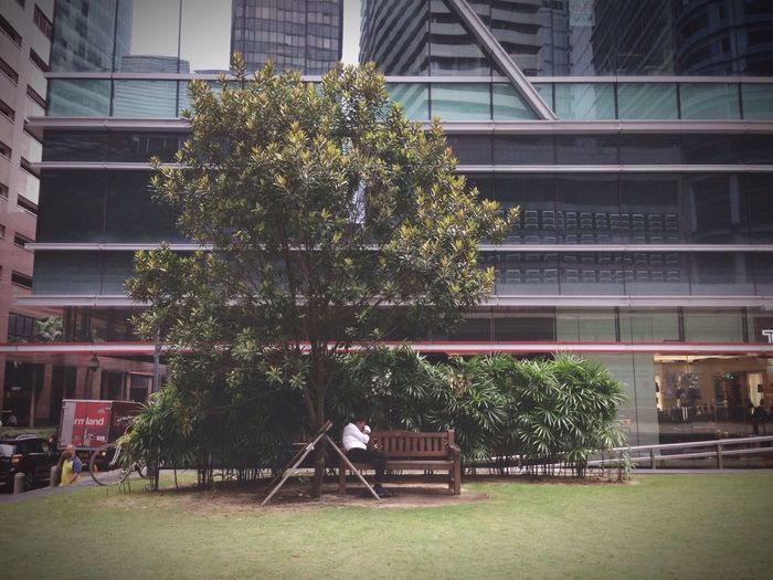 Trees and plants growing outside building