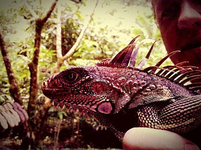 The Traveler - 2015 EyeEm Awards Wild Jungle Friend Iguana Mama Tree House Neighbor