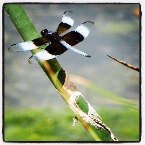 City Park, Denver life. Leicalens Digitalcamera Panasonic  Summertime Citypark Lake Dragonfly Insects  Colorado Denver