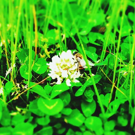 Ari Green Flower Follow Me Hi! Honey