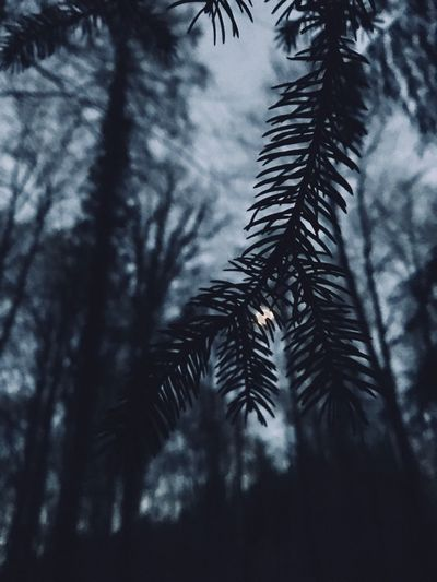 Nightphotography Makro Photography Tree Plant Growth Nature Palm Tree Low Angle View Beauty In Nature Sky Tranquility No People Leaf Scenics - Nature Outdoors Cloud - Sky Plant Part