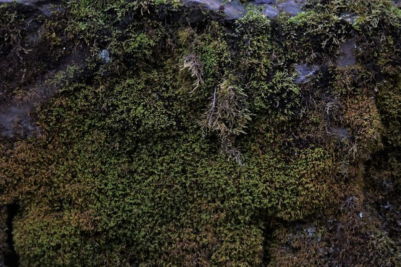 High angle view of trees in the forest