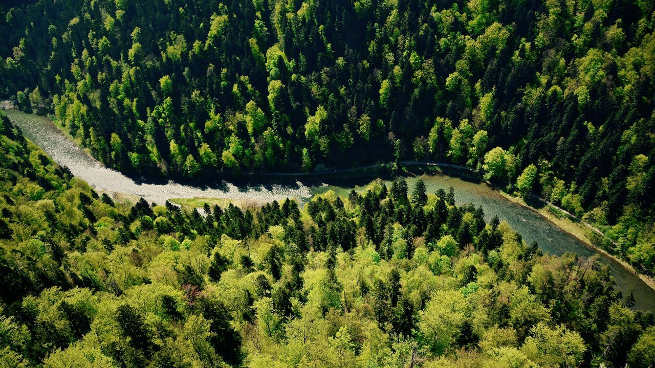 High angle view of river amidst trees at forest