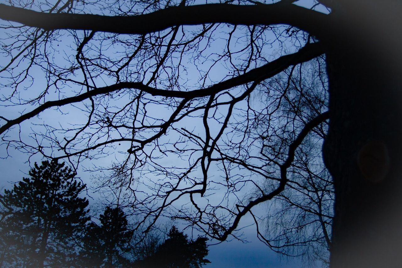 bare tree, tree, branch, silhouette, nature, low angle view, sky, beauty in nature, no people, outdoors, day, scenics